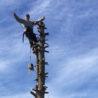 tree removal homer glen illinois